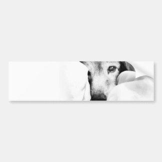 sleepy dog on bed cuddle black white bumper sticker