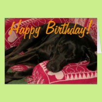 "Sleepy Dog ""Party til you're POOPED"" Birthday Card"