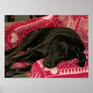 Sleepy Dog Poster