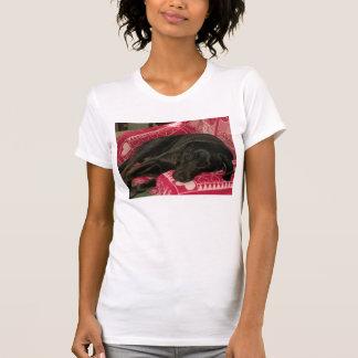 Sleepy Dog Womens Casual Scoop T-Shirt