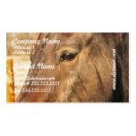 Sleepy Draft Horse Business Cards