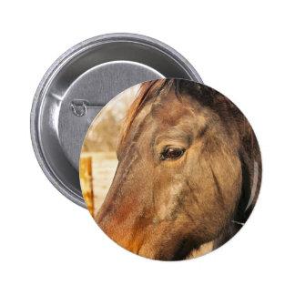 Sleepy Draft Horse Button