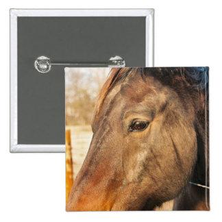 Sleepy Draft Horse Pin