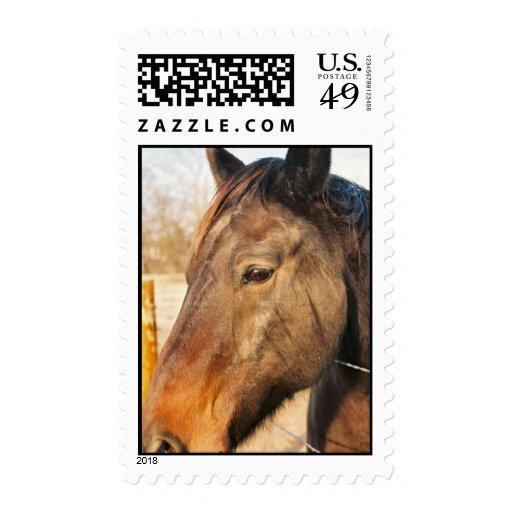 Sleepy Draft Horse Postage Stamp