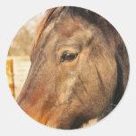 Sleepy Draft Horse Stickers