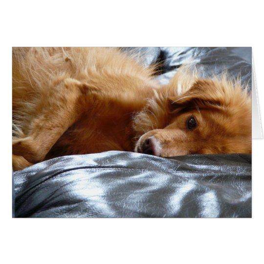 Sleepy Eyed Dog Card