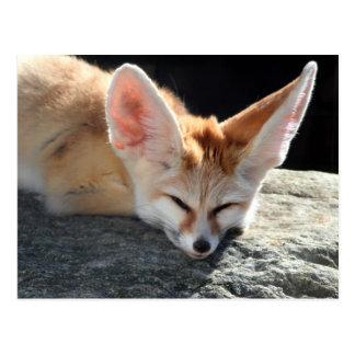 Sleepy Fennec Fox Postcard