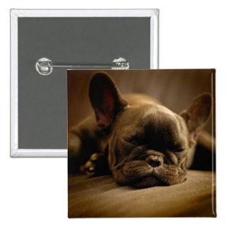 Sleepy French Bulldog Button