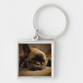 Sleepy French Bulldog Keychain
