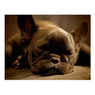 Sleepy French Bulldog Postcard