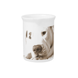 sleepy friendly white pitbull hate deed not breed drink pitcher