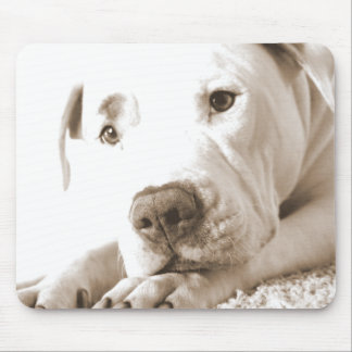 sleepy friendly white pitbull hate deed not breed mouse pad