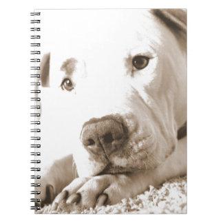 sleepy friendly white pitbull hate deed not breed notebook