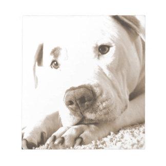 sleepy friendly white pitbull hate deed not breed notepad