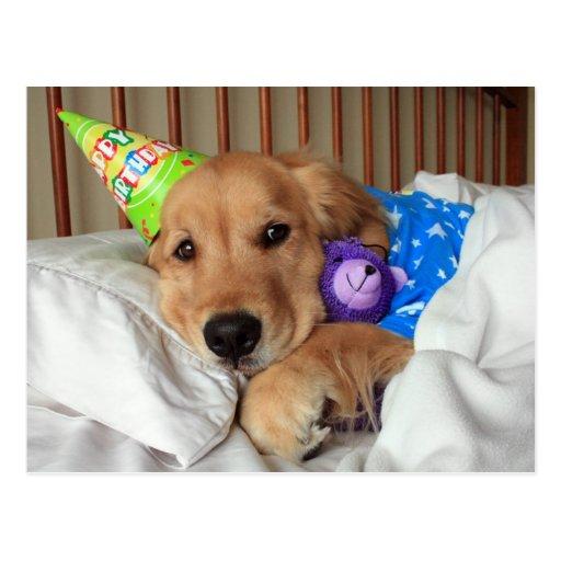 Sleepy Golden Retriever in Pajamas Birthday Postcards