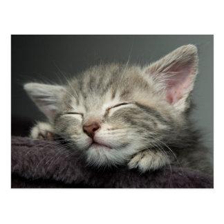 Sleepy Grey, Male Kitten Postcard
