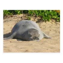 Sleepy Hawaiian Monk Seal Postcard