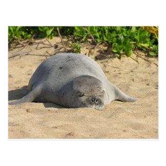 Sleepy Hawaiian Monk Seal Postcards
