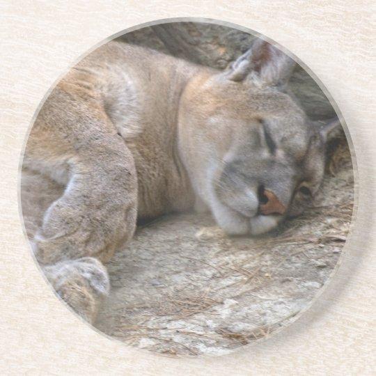 Sleepy Head Sandstone Coaster