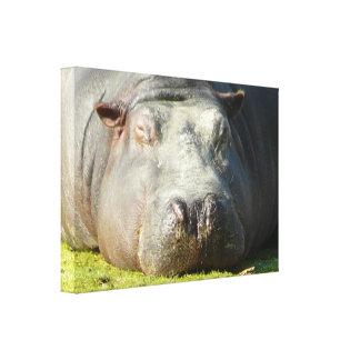 Sleepy Hippo Canvas Print