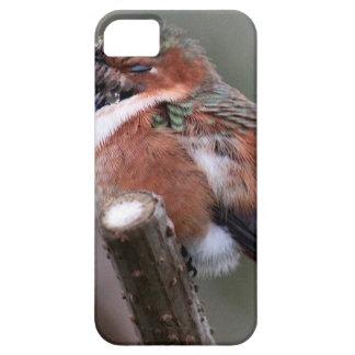 Sleepy Hummingbird iPhone 5 Covers
