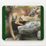 Sleepy Kangaroo Mouse Mats