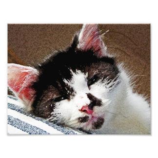 Sleepy Kitten Photo Art