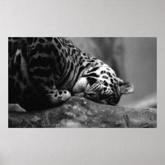 Sleepy Kitten Poster