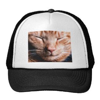 Sleepy Kitten Trucker Hat