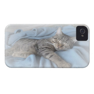 Sleepy Kitty BlackBerry Bold Case