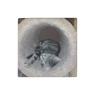 Sleepy Kitty Cat by Shirley Taylor Stone Magnet
