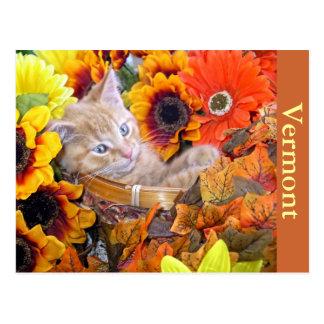 Sleepy Kitty Cat Kitten Leaning Back,Flower Basket Postcard