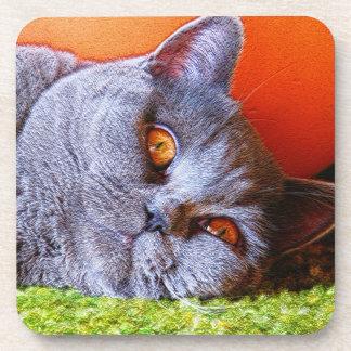 Sleepy Kitty Coaster