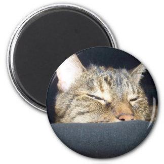 Sleepy kitty magnet
