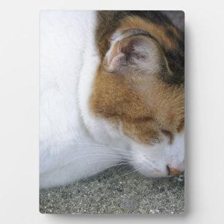 Sleepy Kitty Plaque