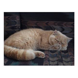 Sleepy Kitty Postcard