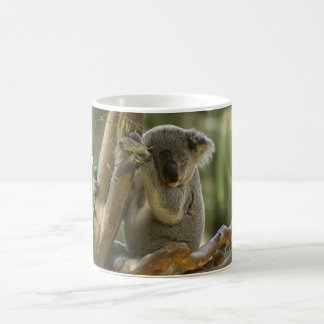 Sleepy Koala Bear Classic White Coffee Mug