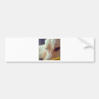 Sleepy Labrador Bumper Sticker