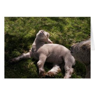 Sleepy Lamb Greeting Card
