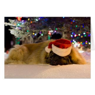 sleepy Leonberger Christmas Card
