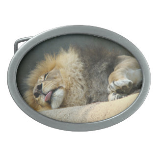 Sleepy lion sticking out the tongue Belt Buckle