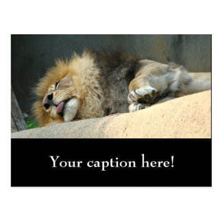 Sleepy lion sticking out the tongue postcard
