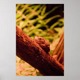 """""""Sleepy Little Frog"""" Poster"""