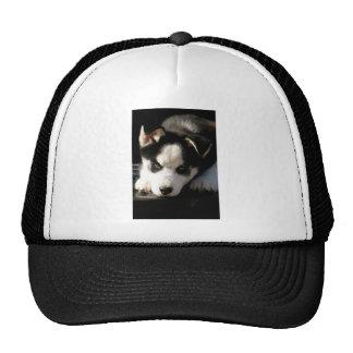 Sleepy Lop Eared Siberian Husky Puppy Trucker Hat