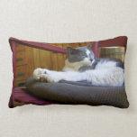Sleepy Miss Biscuit/American MoJo Pillows