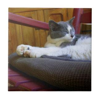 Sleepy Miss Biscuit/Tile