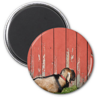 Sleepy Old Goat 2 Inch Round Magnet