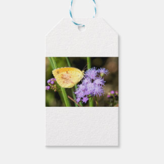 Sleepy Orange Butterfly on Ageratum Wildflowers Gift Tags