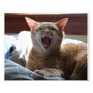 Sleepy Orange Tabby Cat Kitty Yawning Photograph
