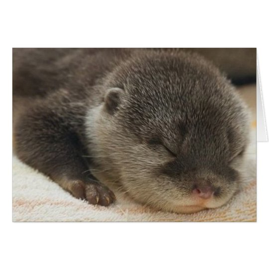 Sleepy Otter Card